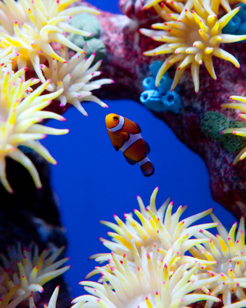 Coral Reef Zone