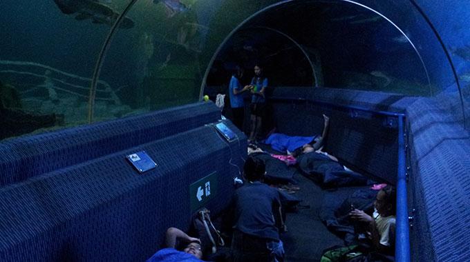 Sleepover with Sharks & Rays Camp